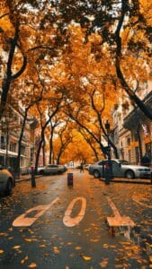 Autumn Leaves and City Streets iPhone Wallpaper