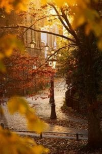 Fall Leaves and A Street Lamp iPhone Wallpaper