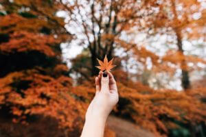 17 Best HD Fall Wallpapers for iPhone 6, 7, 8 and X | Joy of Apple