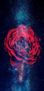 Galactic Rose